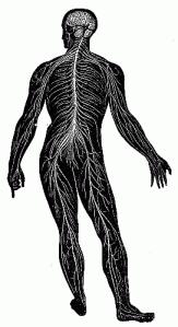 anatomy-01