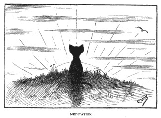 I just love this cute kitty greeting the sunrise!