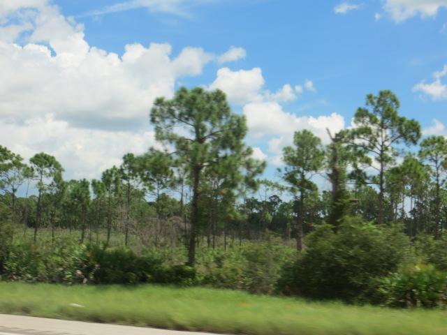 Sky & Trees