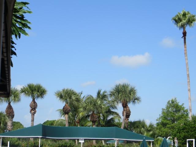 More Foliage & Sky