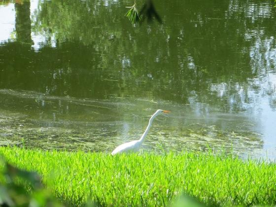 Pretty Birdy Near Water