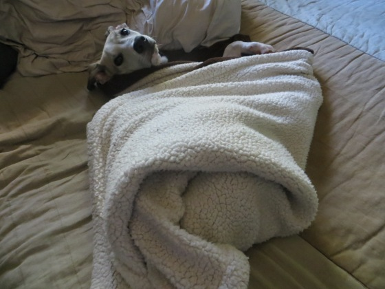 My Family's Current Puppy Remus. He is a sweetie.